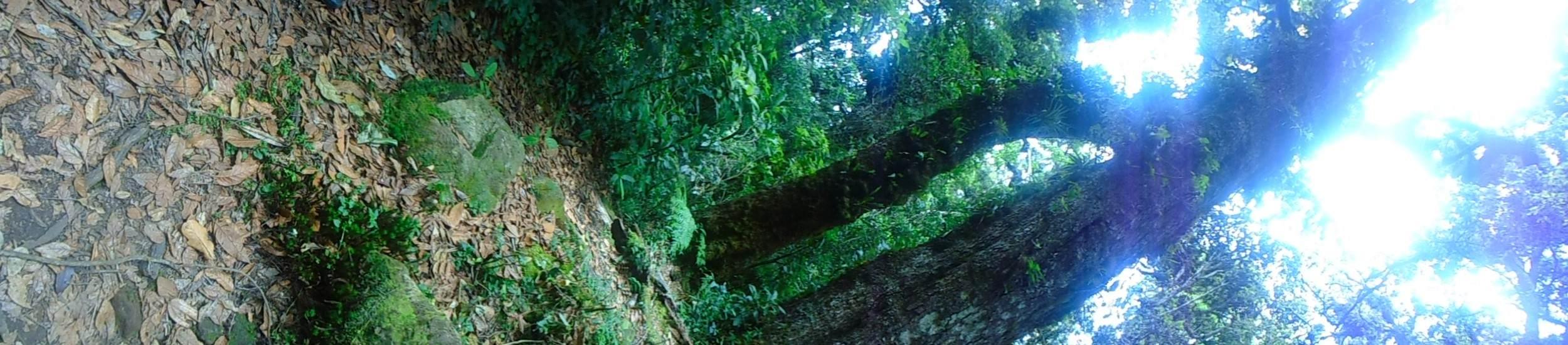 3 el bosque nebuloso (Custom)