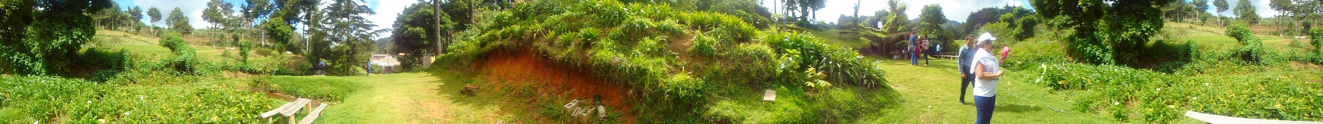 plantaciones ortalizas el pital (Custom)